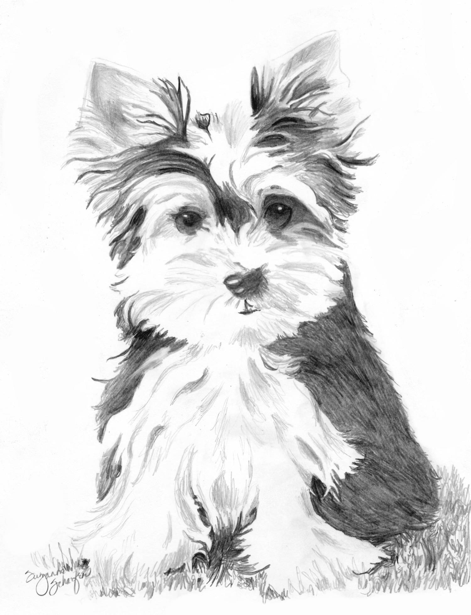 cute yorkie coloring pages - dessin yorkshire